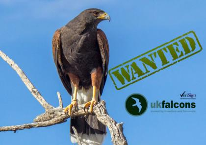 Wanted harris hawk or kestrel